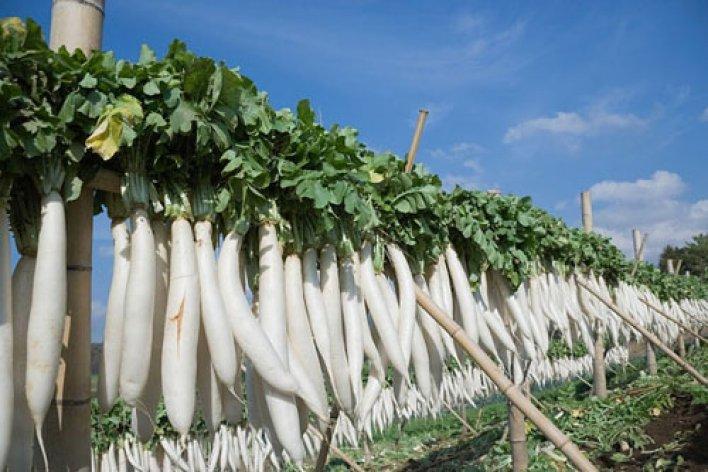 Mẹ Cho Ăn 10 Thực Phẩm Này Không Lo Con Ốm Trong Mùa Đông