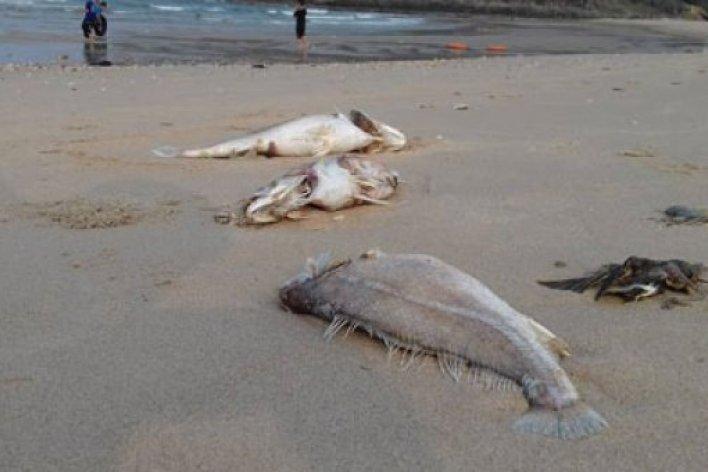 Bé 8 Tuổi Bị Ngộ Độc Nghi Do Ăn Cá Chết Ở Quảng Bình