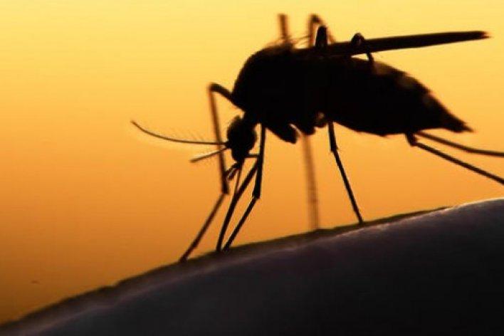 Dịch Zika: Trẻ Em Mắc Bệnh Zika Có Nguy Hiểm Không