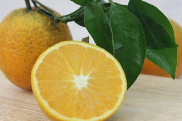 7 Loại Trái Cây Thai Nhi Rất Thích Mẹ Nên Ăn Mỗi Ngày Nhé