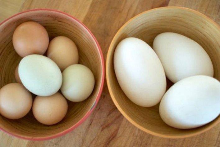 Mẹ Bầu Ăn Trứng Ngỗng Để Con Thông Minh
