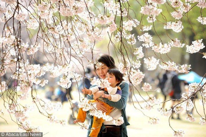 Nguyên Tắc Dạy Con Kiểu Nhật Mà Mọi Phụ Huynh Nên Học Hỏi